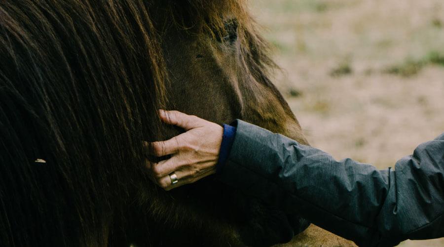 7 gode råd til hesteavlere